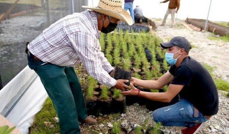 Para evitar migración analizan implementar 'Sembrando Vida' en municipios marginados de Michoacán